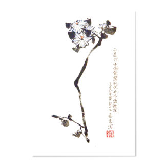 postkarte postcard daisy Chrysantheme