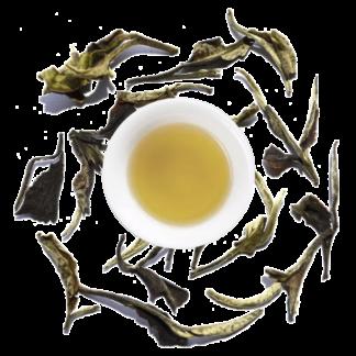 moonlight weisstee bio aus china chinesischer white tea