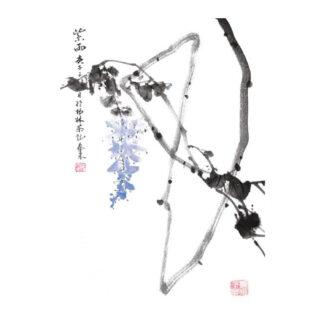 Wisteria Glyzinien Postkarte postcard Tusche Malerei Sumi-e painting chinesische japanische Zeichnung Kunstpostkarten